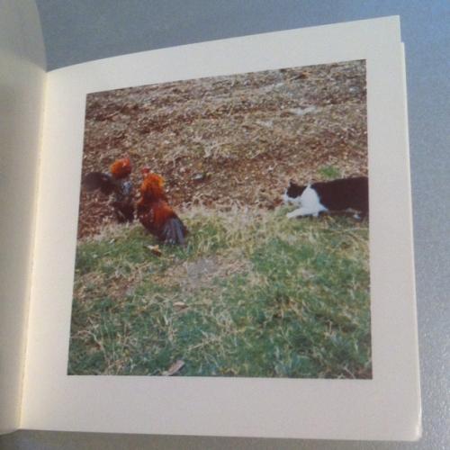 Künstlerbuch   artists' book: Sol LeWitt, Cock Fight Dance, 1980 (Foto: Marlene Obermayer)